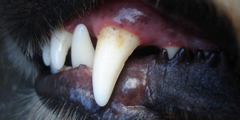 L'hygiène et les soins dentaires